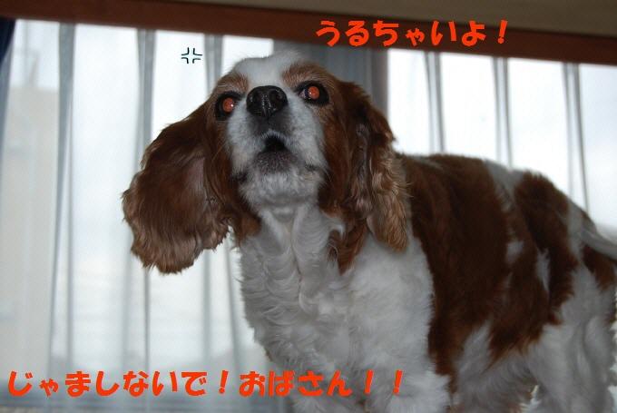 c0136838_1740341.jpg