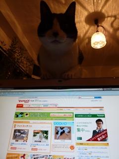 Yahoo!ペット今日の1枚猫 空編。 _a0143140_0291699.jpg