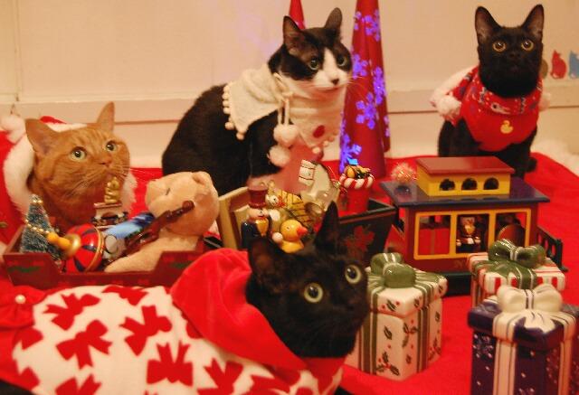 Yahoo!ペット第3回「クリスマスコスプレ」コンテストエントリー猫 空ぽーしぇるのぇるろった編。_a0143140_1574418.jpg