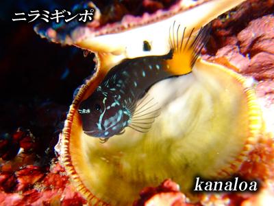 Divehouse Kanaloa  八丈島 ダイビングログ_b0189640_20531871.jpg