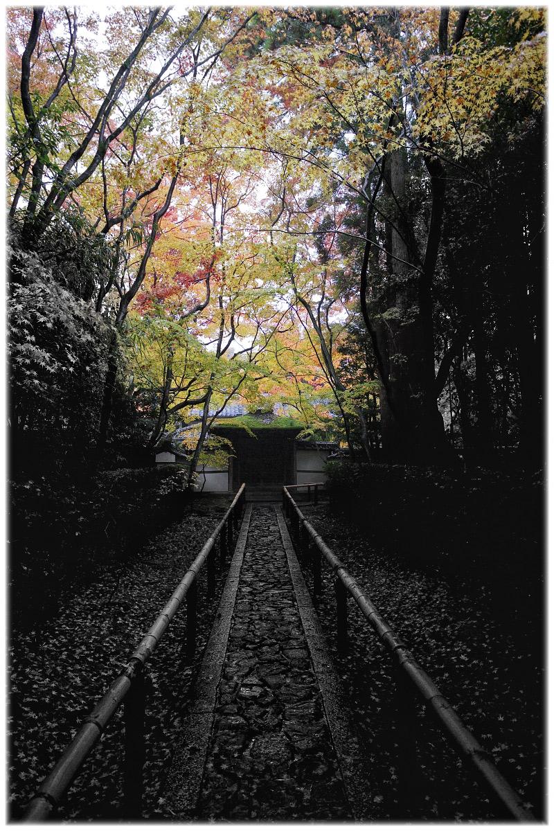 紅葉 2010 <高桐院. 大徳寺>_f0021869_0392895.jpg