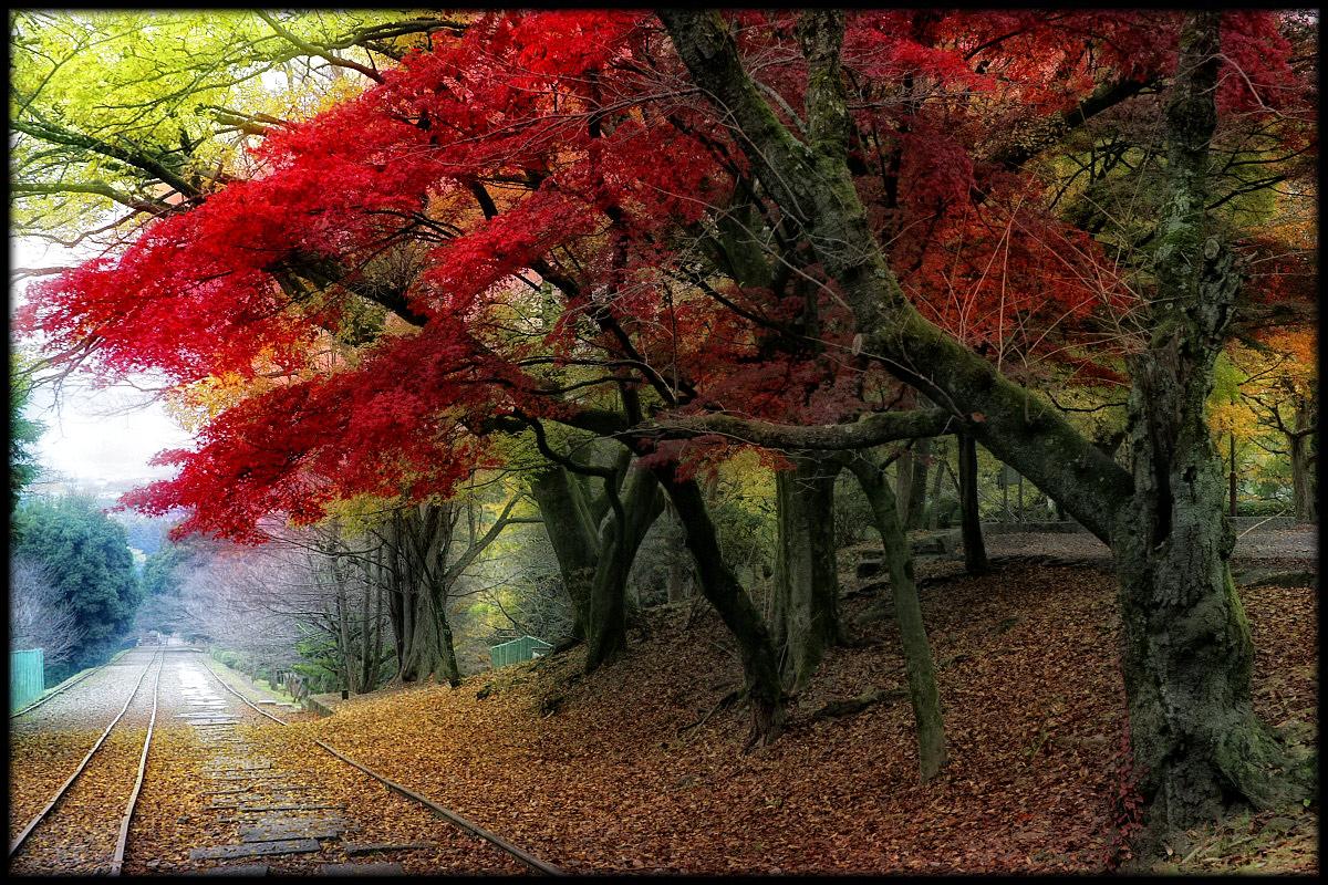 紅葉 2010 <インクライン> _f0021869_23433248.jpg