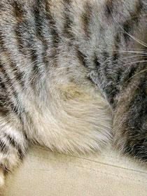 うずまき猫の見つけ方_b0195783_10105771.jpg