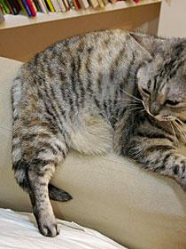 うずまき猫の見つけ方_b0195783_1094233.jpg