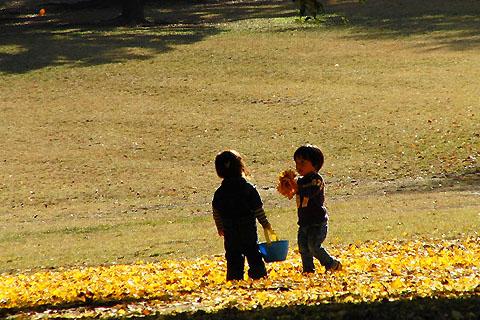 サフランと冬咲きクロッカス。それぞれの秋_f0030085_20361067.jpg