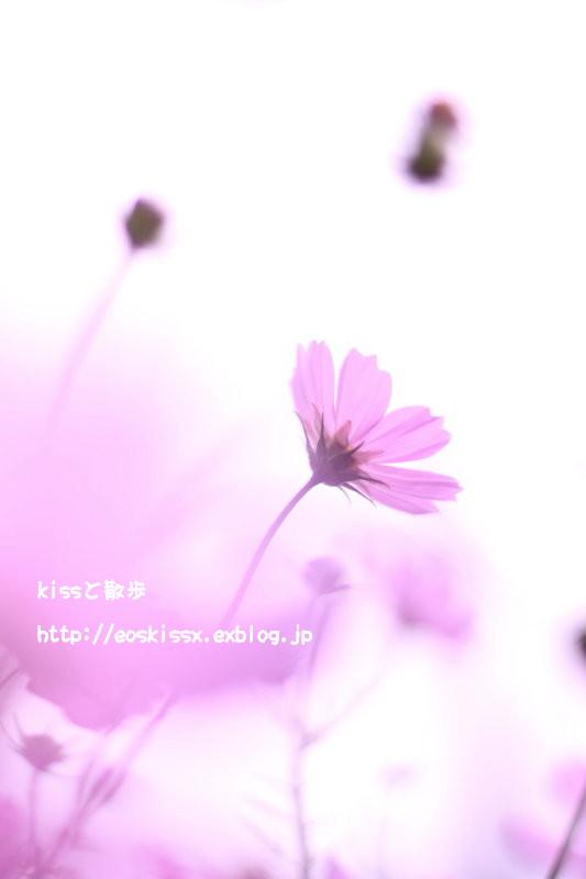 b0152088_22245580.jpg