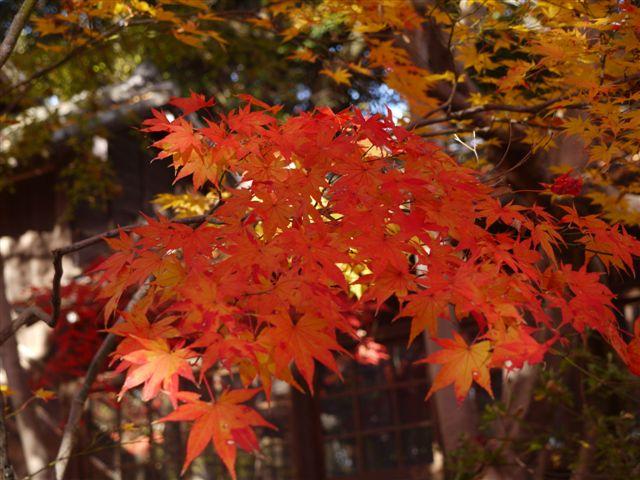 2010紅葉第一弾!!長谷山本土寺です、綺麗でした(*^^)v_b0175688_1910309.jpg