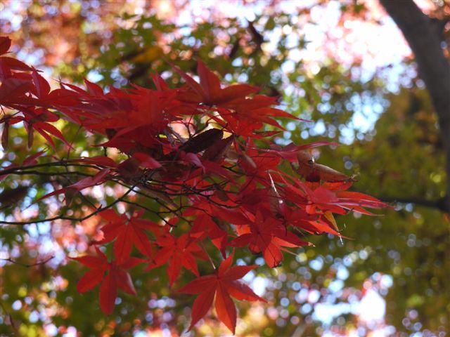 2010紅葉第一弾!!長谷山本土寺です、綺麗でした(*^^)v_b0175688_19105511.jpg