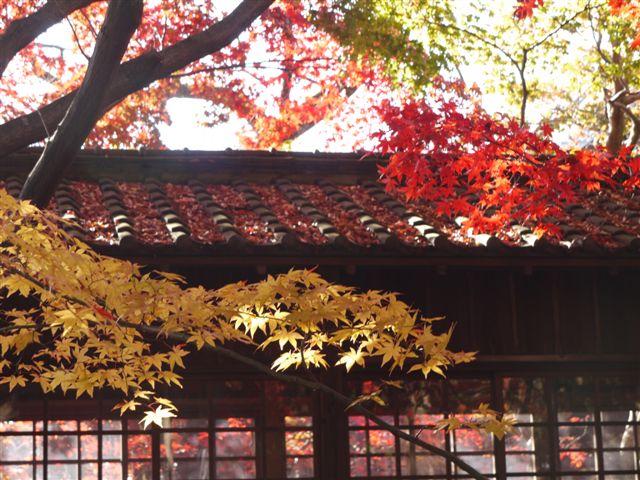 2010紅葉第一弾!!長谷山本土寺です、綺麗でした(*^^)v_b0175688_19142460.jpg