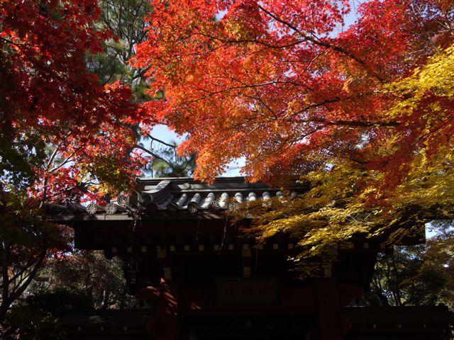 2010紅葉第一弾!!長谷山本土寺です、綺麗でした(*^^)v_b0175688_19143579.jpg