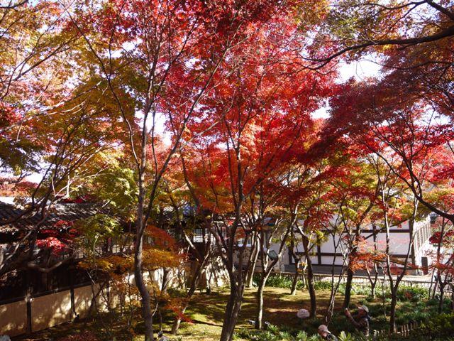 2010紅葉第一弾!!長谷山本土寺です、綺麗でした(*^^)v_b0175688_19152549.jpg