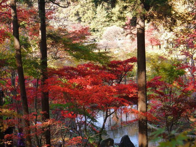2010紅葉第一弾!!長谷山本土寺です、綺麗でした(*^^)v_b0175688_19161386.jpg