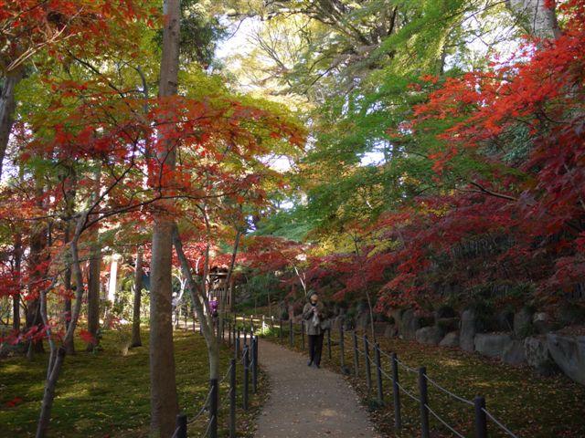 2010紅葉第一弾!!長谷山本土寺です、綺麗でした(*^^)v_b0175688_19163147.jpg