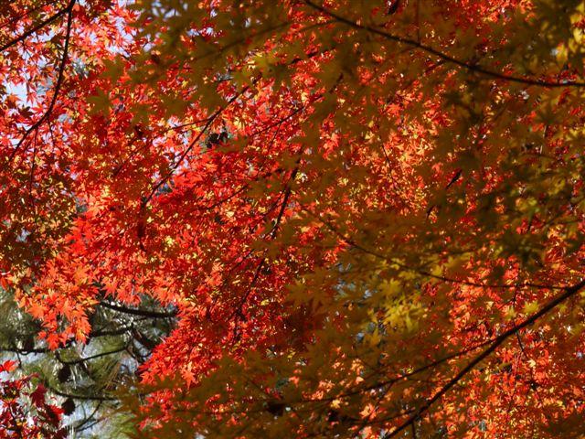 2010紅葉第一弾!!長谷山本土寺です、綺麗でした(*^^)v_b0175688_19183617.jpg