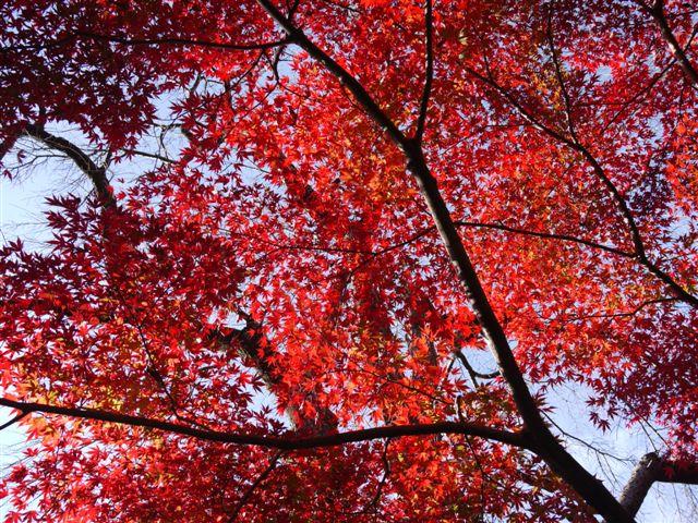2010紅葉第一弾!!長谷山本土寺です、綺麗でした(*^^)v_b0175688_19185280.jpg