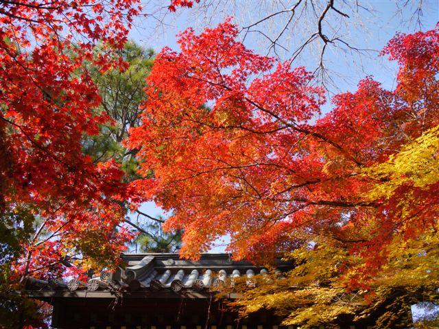 2010紅葉第一弾!!長谷山本土寺です、綺麗でした(*^^)v_b0175688_19202273.jpg