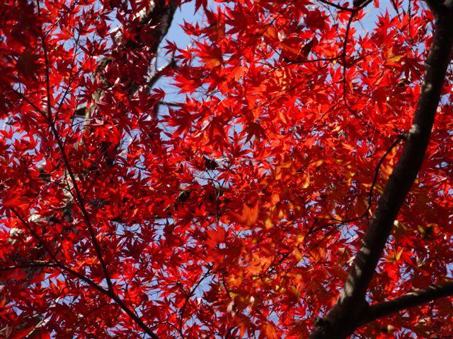 2010紅葉第一弾!!長谷山本土寺です、綺麗でした(*^^)v_b0175688_19203325.jpg