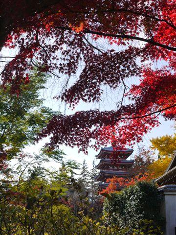 2010紅葉第一弾!!長谷山本土寺です、綺麗でした(*^^)v_b0175688_19234726.jpg