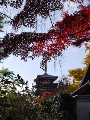 2010紅葉第一弾!!長谷山本土寺です、綺麗でした(*^^)v_b0175688_19241552.jpg