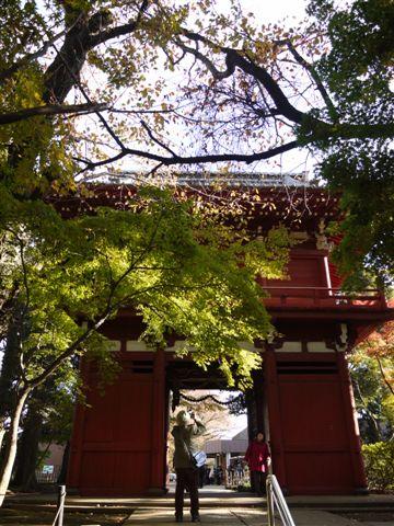 2010紅葉第一弾!!長谷山本土寺です、綺麗でした(*^^)v_b0175688_19272935.jpg