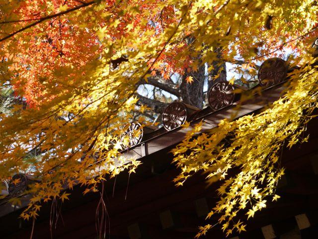 2010紅葉第一弾!!長谷山本土寺です、綺麗でした(*^^)v_b0175688_19335013.jpg