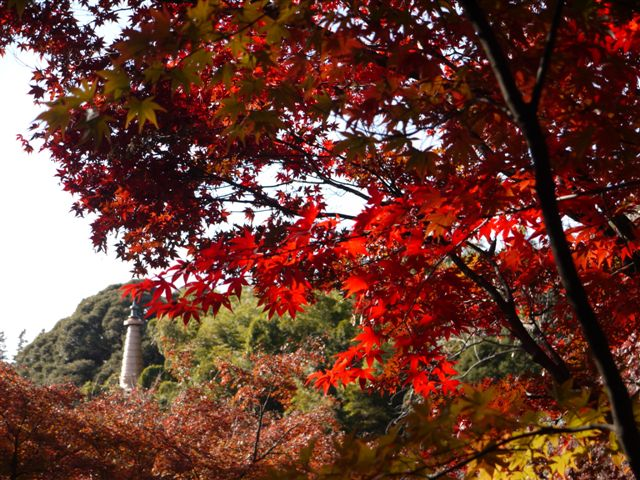 2010紅葉第一弾!!長谷山本土寺です、綺麗でした(*^^)v_b0175688_1993627.jpg