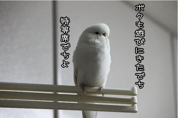 b0062090_1193648.jpg