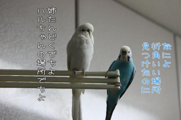 b0062090_1201779.jpg