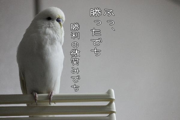 b0062090_1203345.jpg