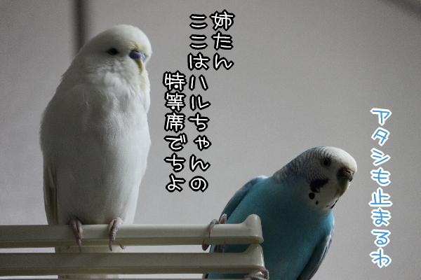 b0062090_120385.jpg