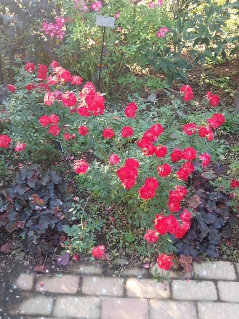 花菜ガーデン_d0164691_7264966.jpg