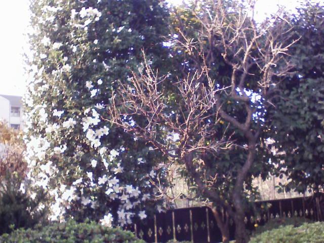 庭の木々_c0066693_1633830.jpg