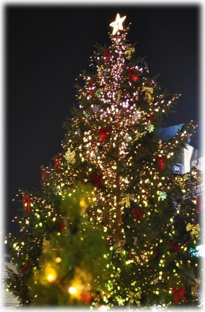 福井駅西口のイルミネーションと福井城址のライトアップ_f0229508_2220108.jpg