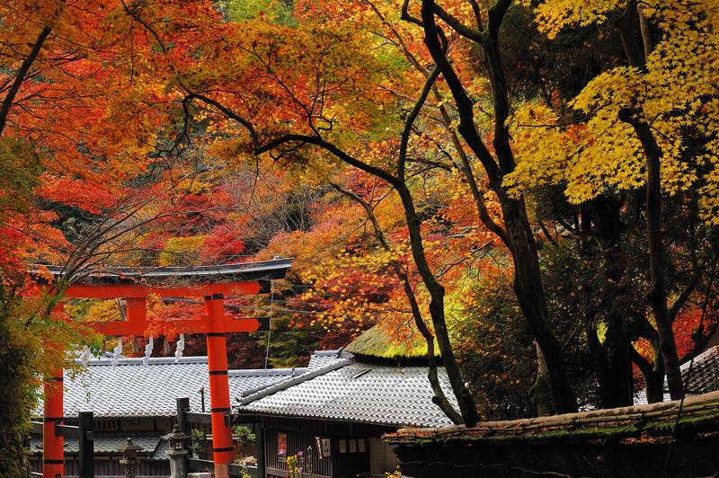 2010京都の紅葉 鳥居本_f0032011_20483181.jpg