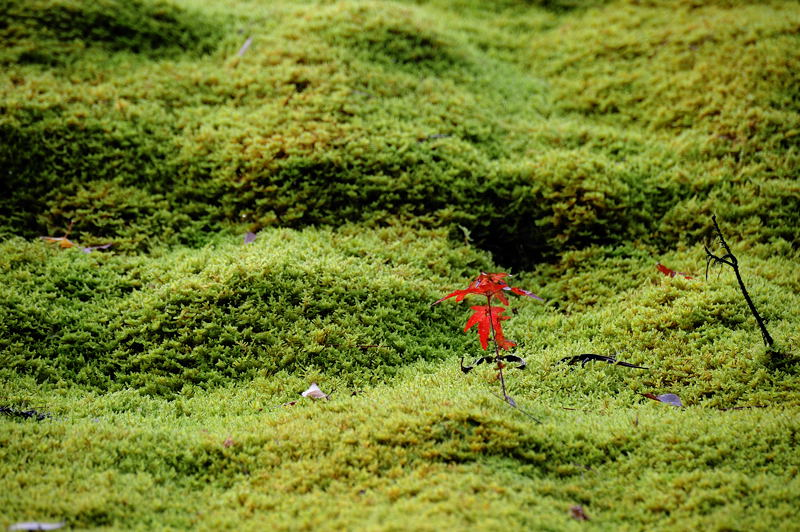 2010京都の紅葉 鳥居本_f0032011_20491516.jpg