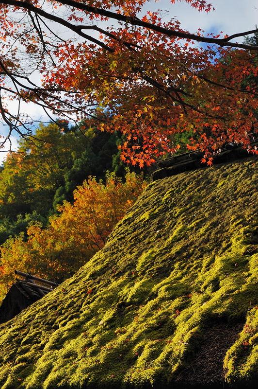 2010京都の紅葉 鳥居本_f0032011_20493072.jpg