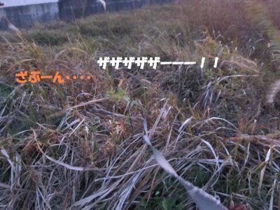 f0143123_20105533.jpg