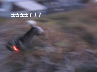 f0143123_20115631.jpg