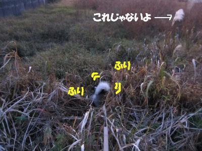 f0143123_20123840.jpg