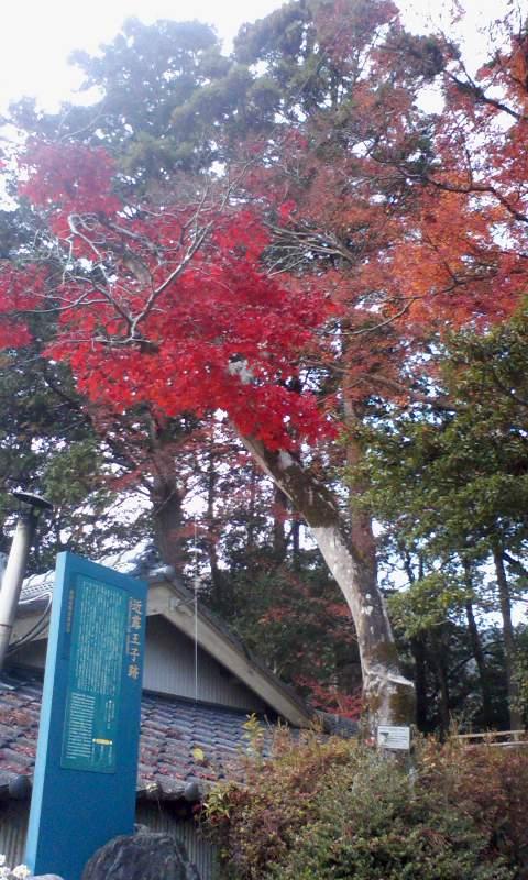 熊野 近露を楽しんで♪_a0088827_1532997.jpg