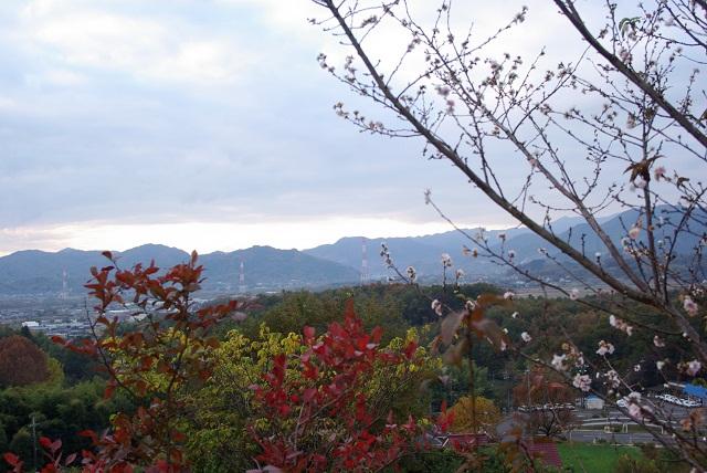 お散歩コースの紅葉_f0214527_1623435.jpg
