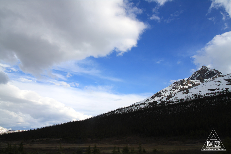 071 Icefields Parkway ~黄金色に輝く帰り道~_c0211532_19123136.jpg