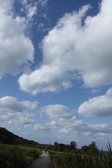 11月26日すばらしいお天気ですよ!_c0070933_21363064.jpg