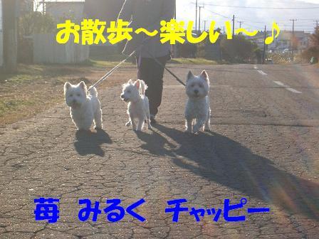c0212637_834814.jpg