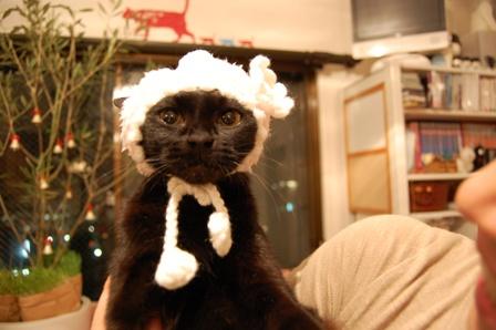 ろったちゃんと毛糸の帽子猫 ろった編。_a0143140_23501195.jpg