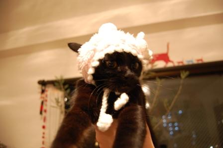 ろったちゃんと毛糸の帽子猫 ろった編。_a0143140_2355368.jpg