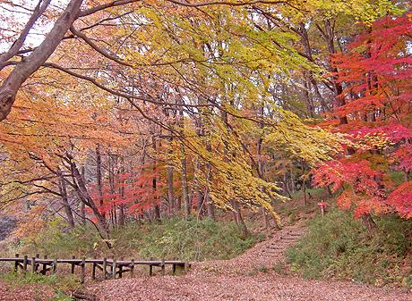 11月26日 嶺公園 菖蒲園の紅葉_a0001354_229478.jpg