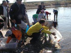 続・続・ 今川 2010.11.21「小さな命」救出作戦_f0197754_031289.jpg