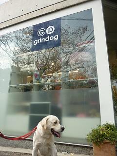 dog shop    ナイロン製カラー&リード_a0165160_5183992.jpg