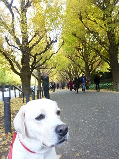 dog shop    ナイロン製カラー&リード_a0165160_5515178.jpg